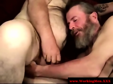 Mature Hairy Bears Sucking Cock